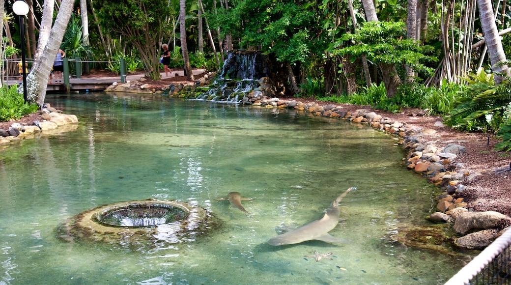 Daydream Island mit einem Meeresbewohner und Zootiere