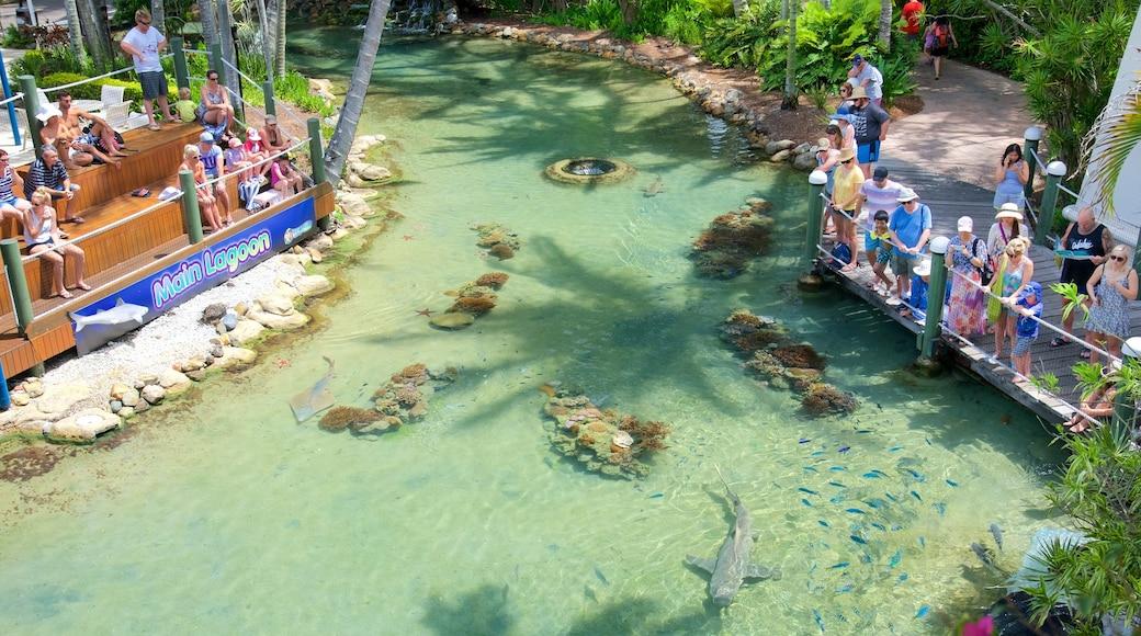 Daydream Island mit einem Meeresbewohner und Zootiere sowie kleine Menschengruppe