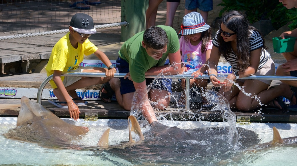 Daydream Island showing zoo animals and marine life as well as a small group of people