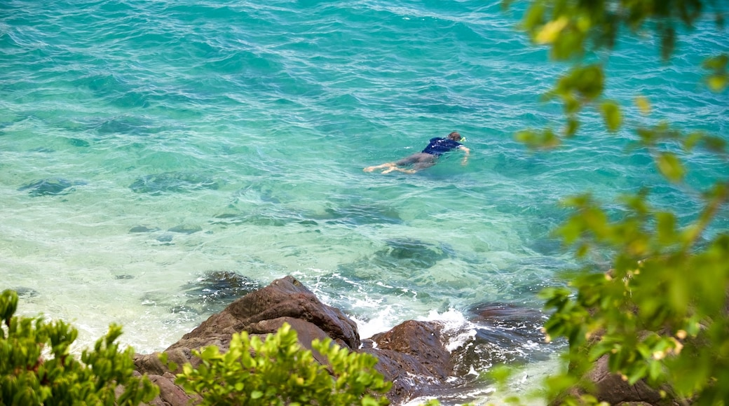 Daydream Island showing general coastal views and snorkelling as well as an individual male