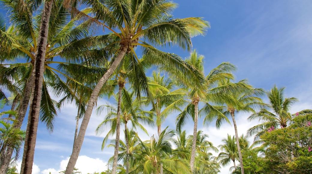 Daydream Island Rejuvenation Day Spa welches beinhaltet tropische Szenerien