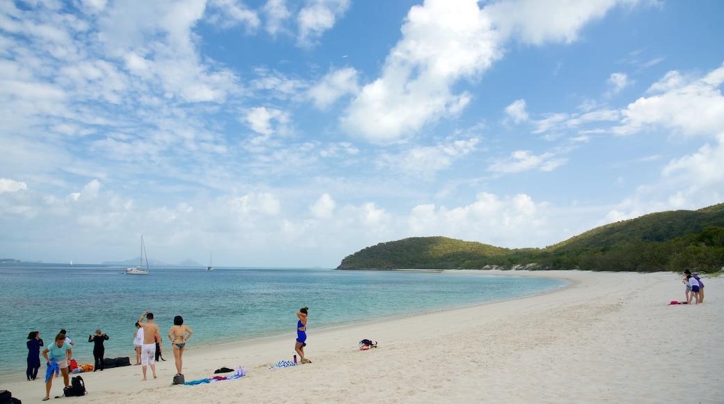 Hamilton Island welches beinhaltet tropische Szenerien, Landschaften und allgemeine Küstenansicht