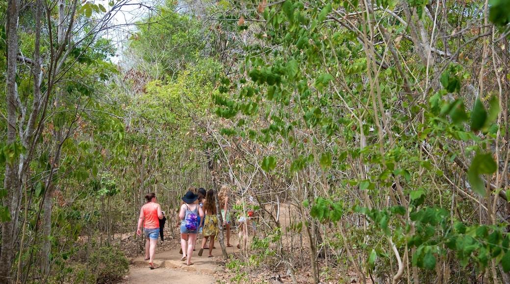 Hamilton Island welches beinhaltet tropische Szenerien und Wandern oder Spazieren