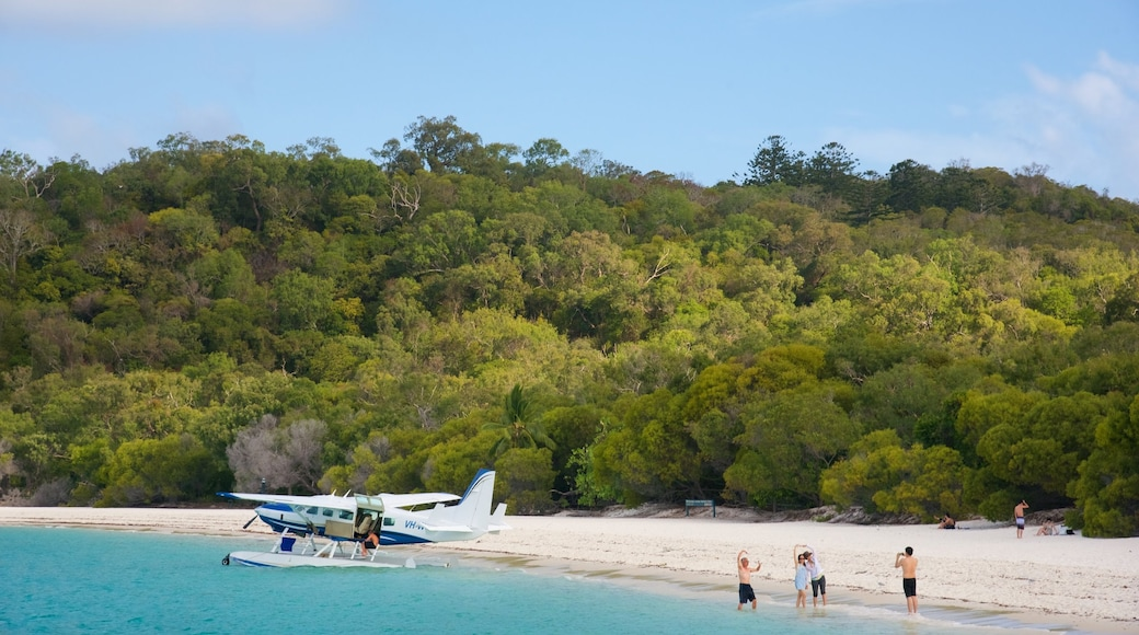 Hamilton Island showing aircraft, a sandy beach and tropical scenes