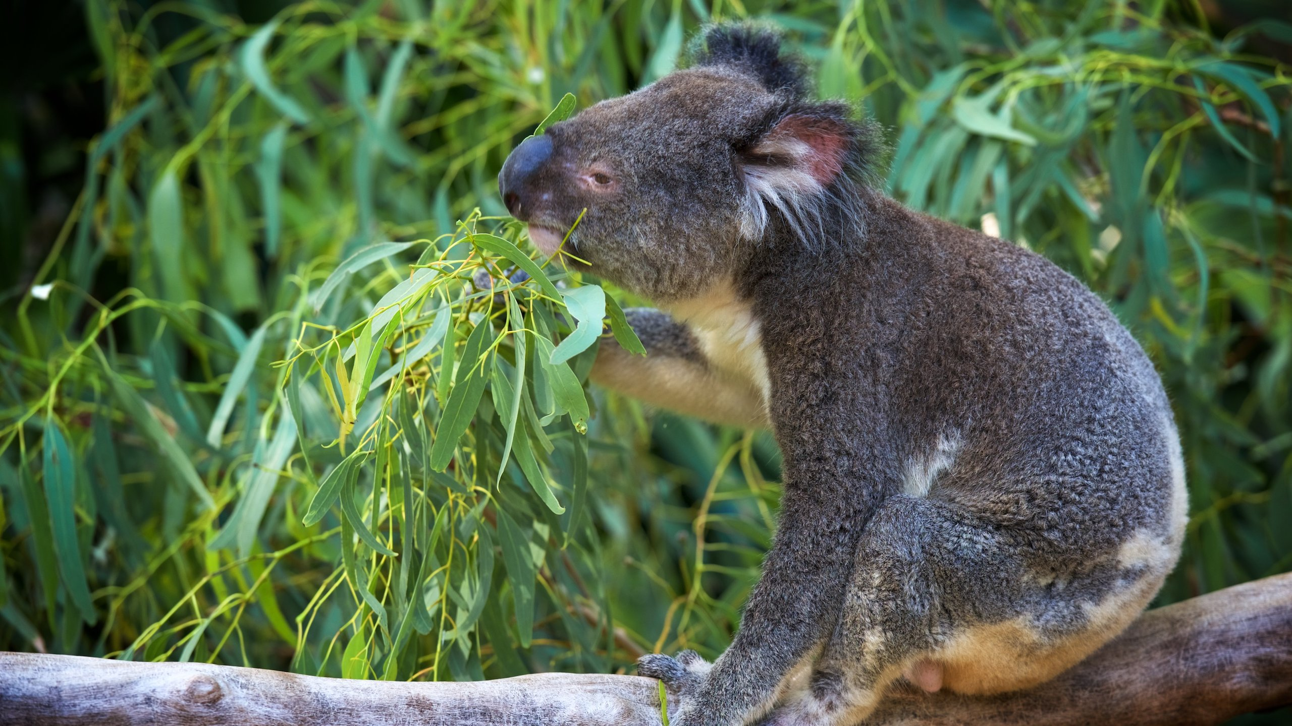 Rise early and have breakfast with the koalas in this compact Australian wildlife park in the stunning Whitsunday Island region of Queensland.