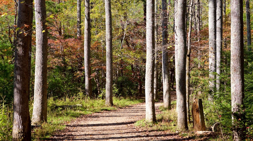 Cades Cove featuring forests