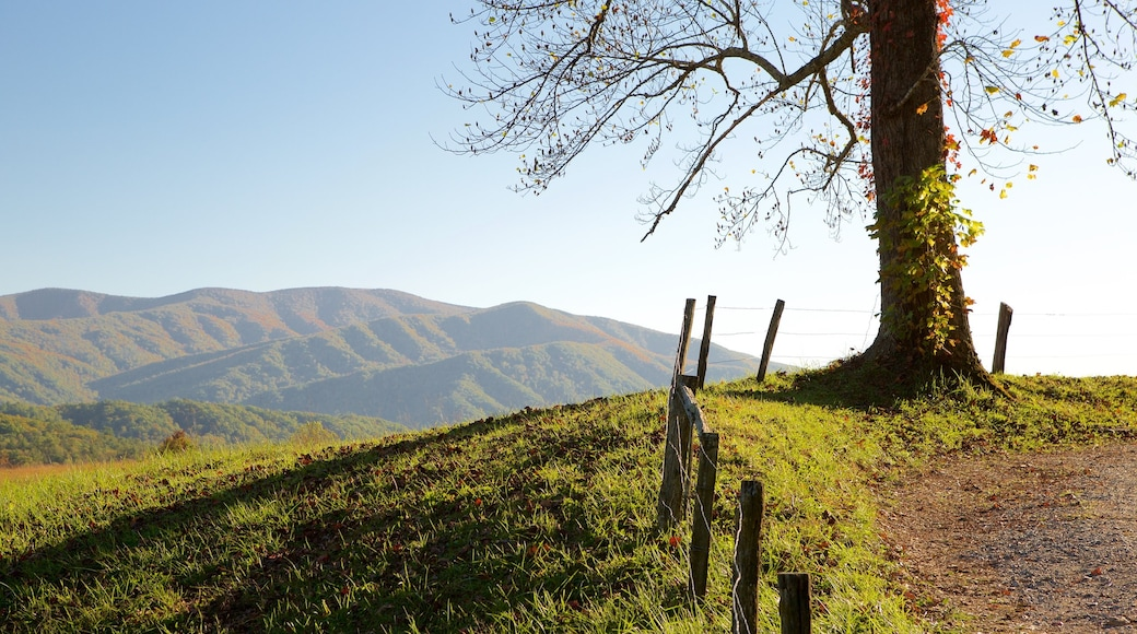 Cades Cove showing tranquil scenes and mountains