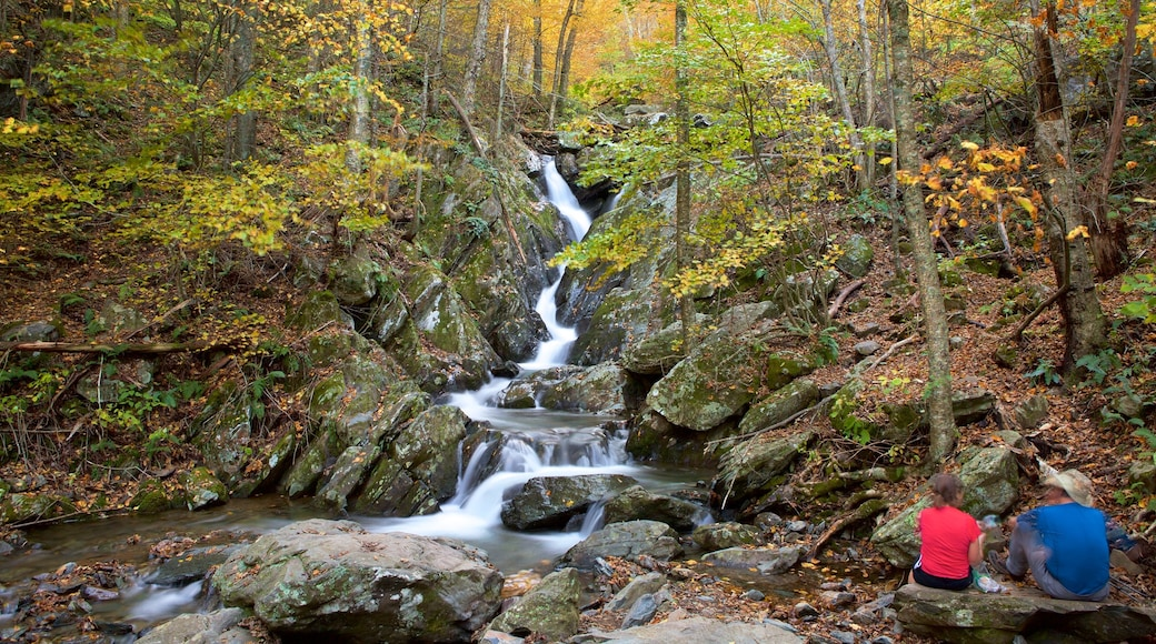 Shenandoah National Park showing a river or creek and forests as well as a couple