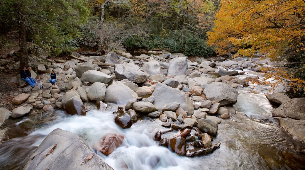 Great Smoky Mountains National Park which includes a river or creek and forest scenes