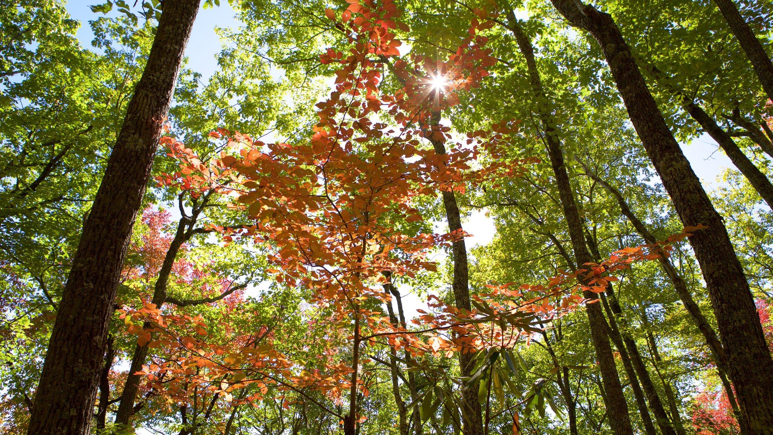 Laurel Falls, Gatlinburg, Tennessee, United States of America