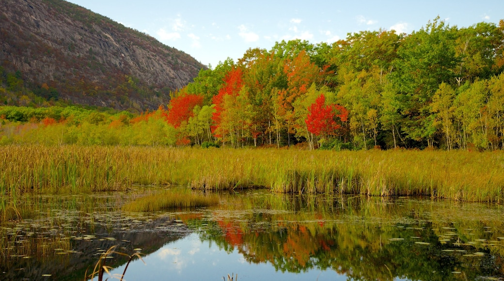Acadia National Park showing wetlands, a lake or waterhole and forests