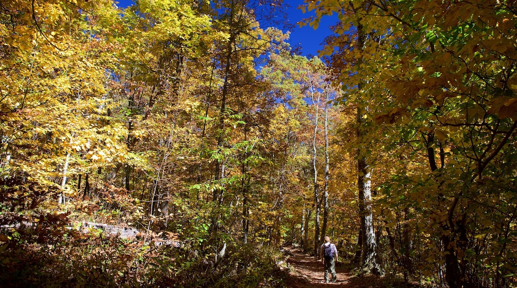 Shenandoah National Park which includes forests and hiking or walking as well as an individual male