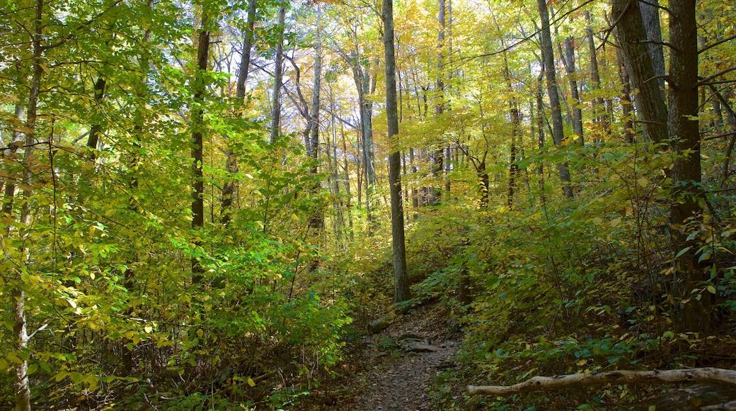 Shenandoah National Park showing forest scenes