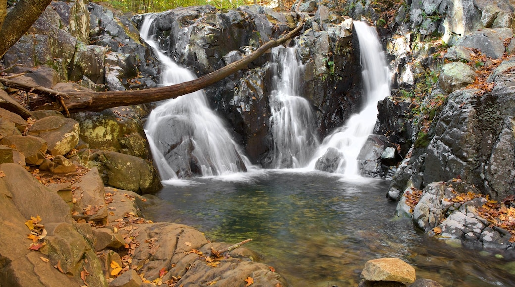 Shenandoah National Park showing a cascade and a river or creek