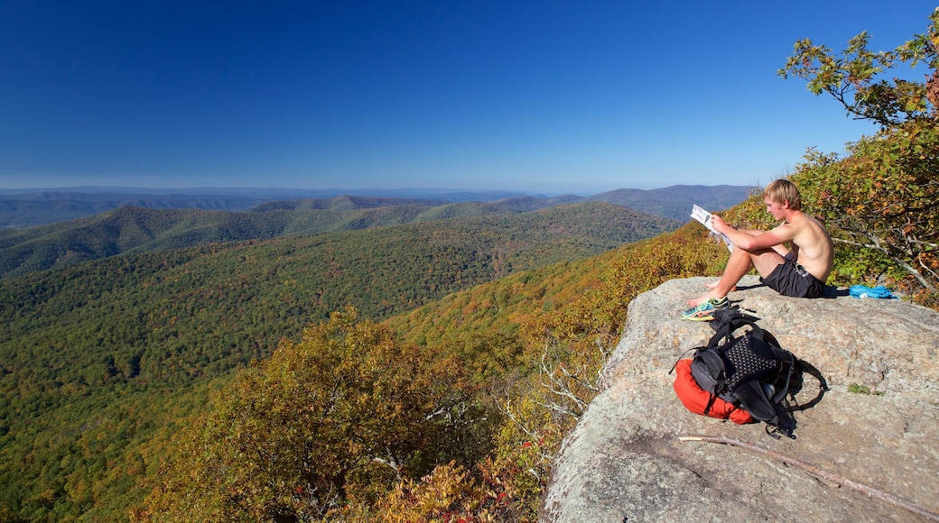 Shenandoah National Park showing tranquil scenes, forest scenes and mountains