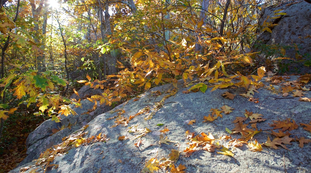 Shenandoah National Park which includes fall colors and forest scenes