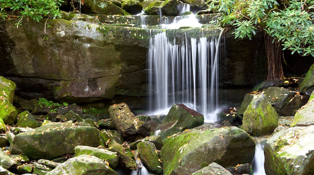 Great Smoky Mountains National Park which includes a waterfall