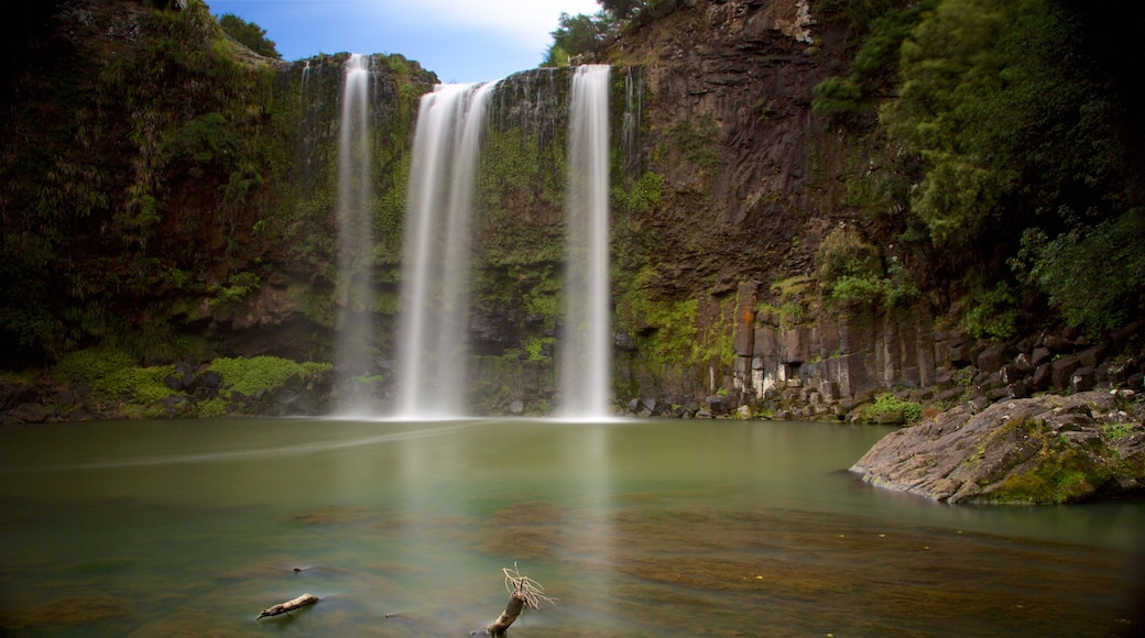 Whangarei Falls featuring forests, a waterfall and a river or creek