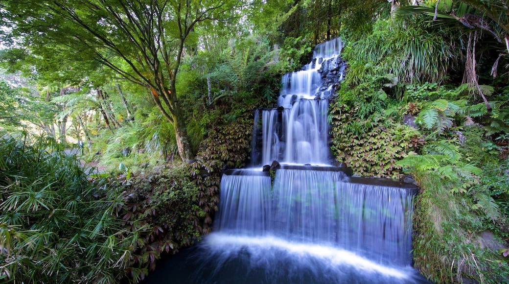 Pukekura Park which includes a cascade and forests