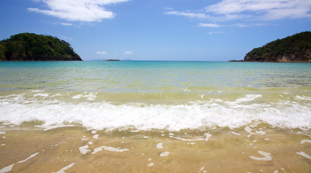Tutukaka which includes a beach and a bay or harbour