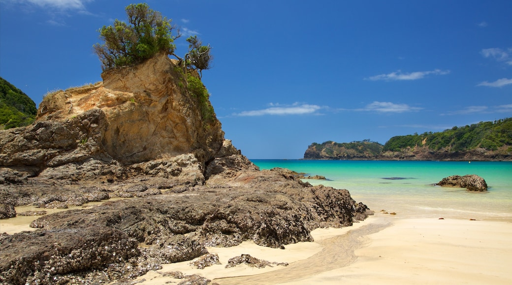 Tutukaka which includes rocky coastline, a beach and a bay or harbour
