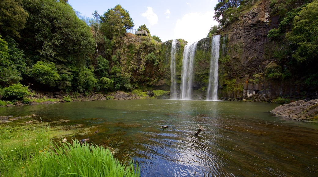 Whangarei Falls which includes a river or creek, forest scenes and a cascade