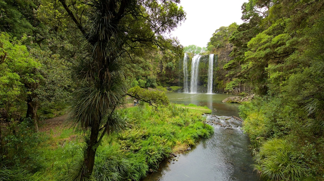Whangarei Falls which includes a waterfall, forests and a river or creek