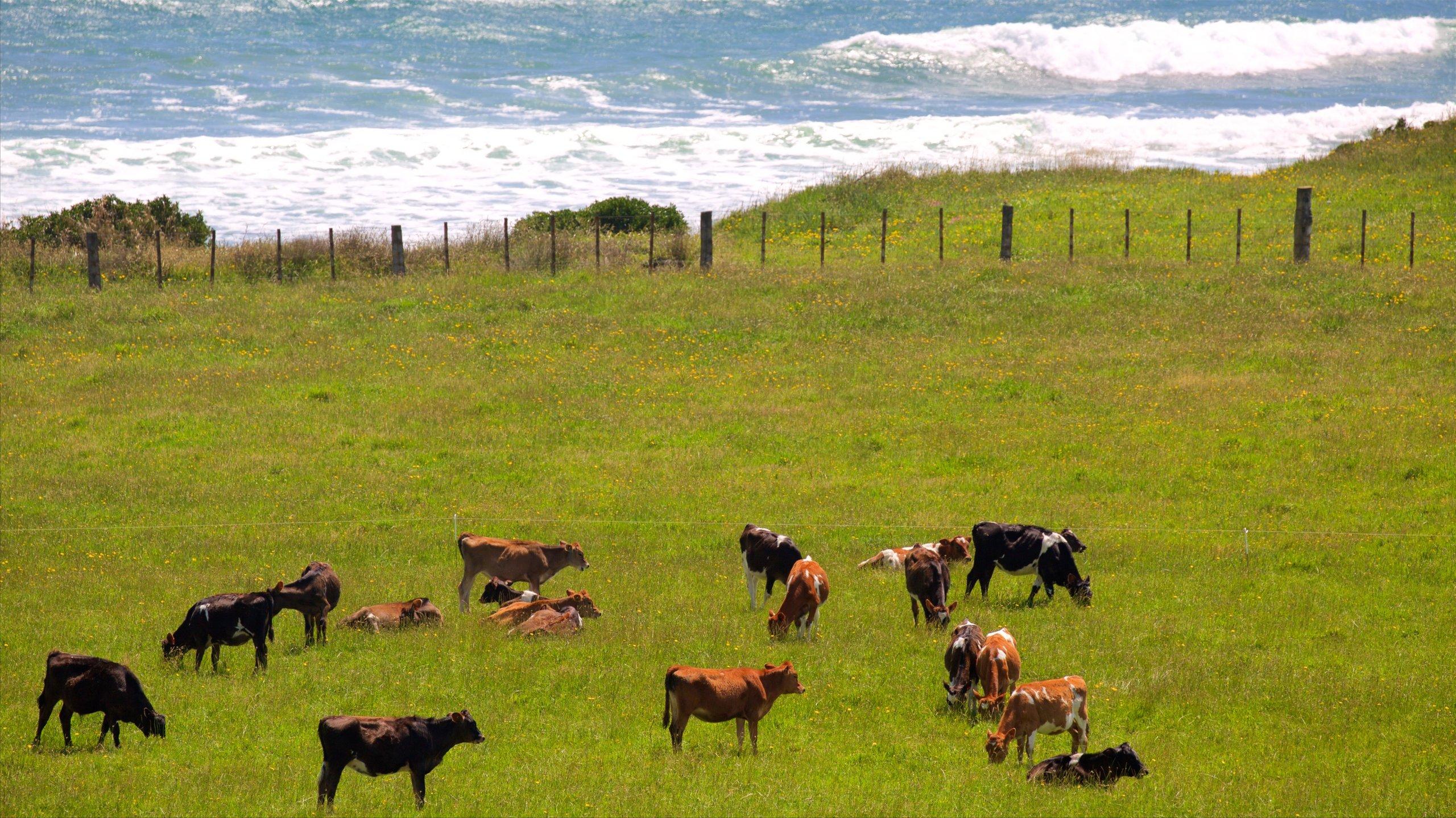 South Taranaki District, Taranaki, Neuseeland