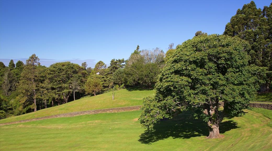 Bowl of Brooklands showing a garden