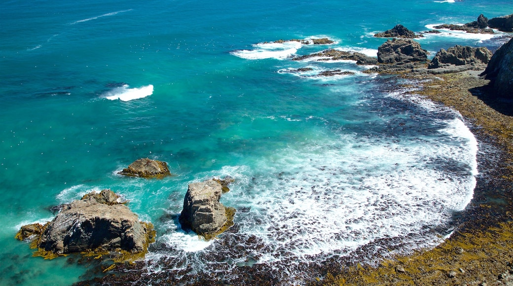 Kaka Point which includes rocky coastline and a bay or harbour