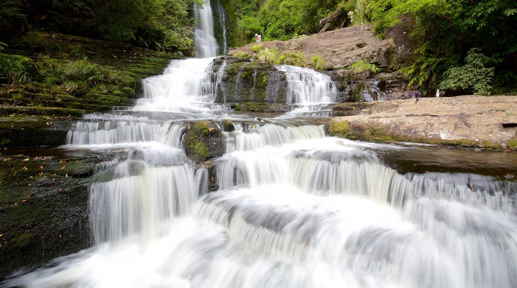 McLean Falls which includes forest scenes, a river or creek and a waterfall