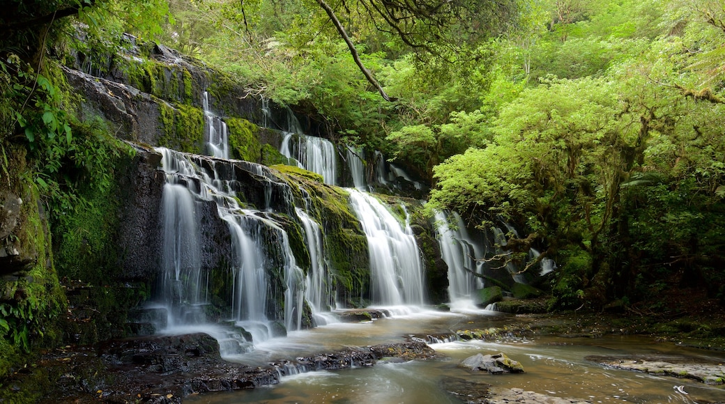 Purakaunui Falls showing a waterfall, forest scenes and a river or creek