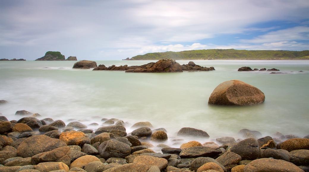 Tauranga Bay Seal Colony which includes rocky coastline