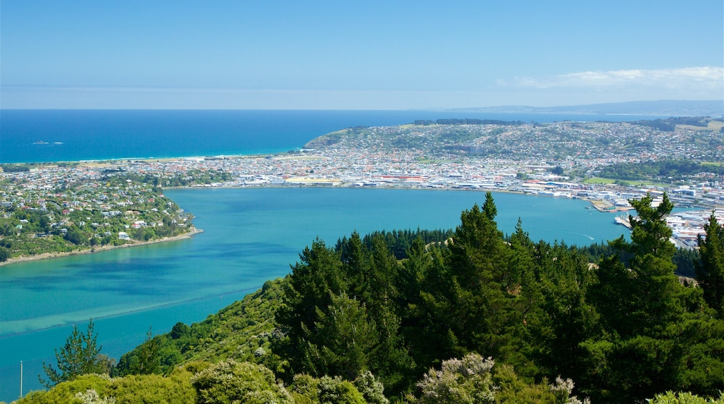 Signal Hill featuring forest scenes, a city and a bay or harbour