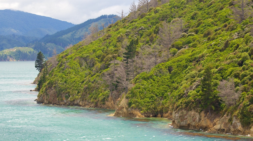 Queen Charlotte Sound which includes mountains, forests and a bay or harbour
