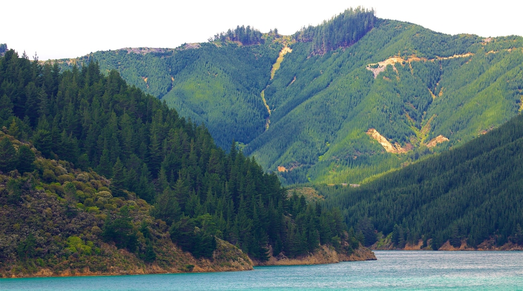 Queen Charlotte Sound featuring forest scenes, a bay or harbour and mountains