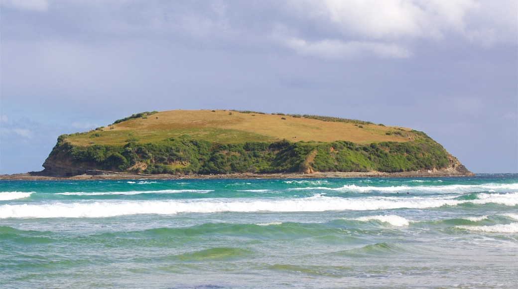 Owaka showing surf, rugged coastline and a bay or harbour