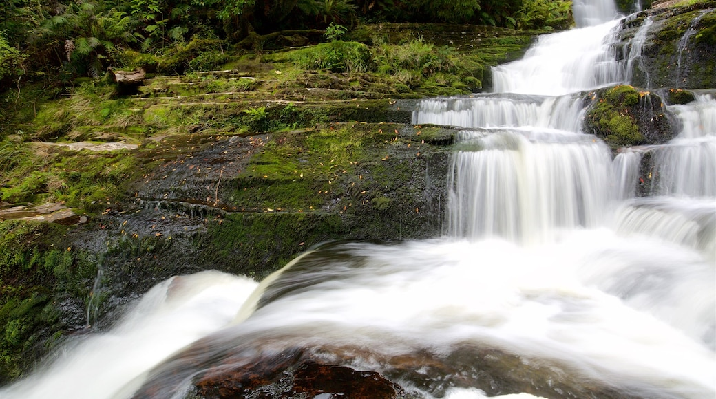 McLean Falls showing forest scenes and a cascade