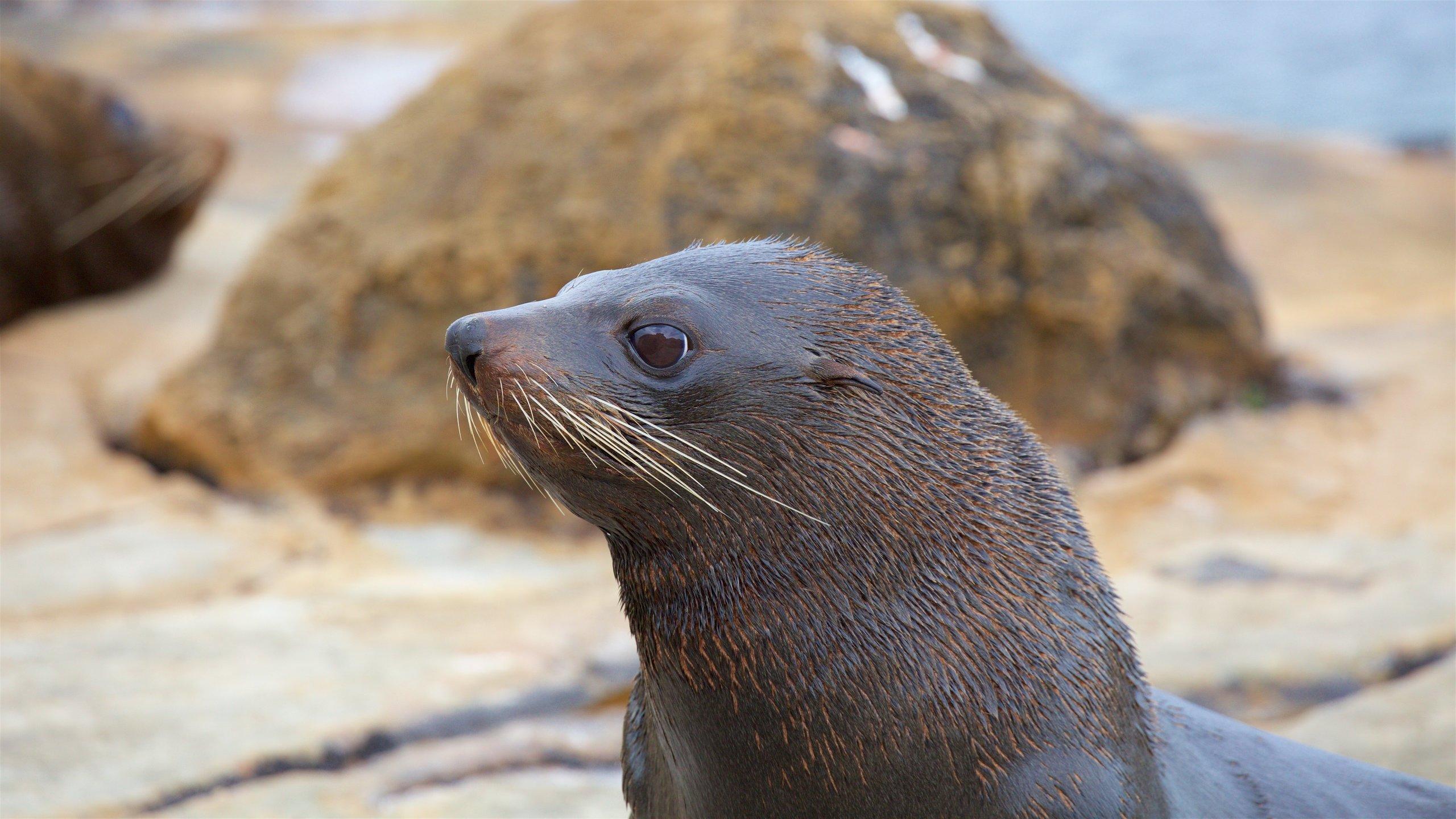 Shag Point Scenic Reserve (reserva natural), Shag Point, Otago, Nueva Zelanda