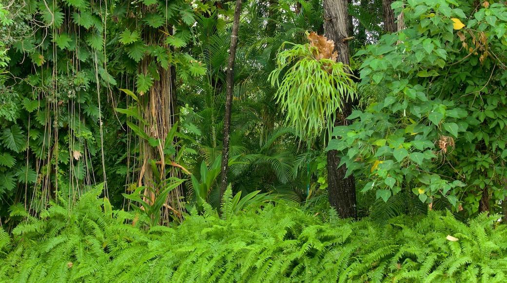 Hervey Bay Botanic Garden