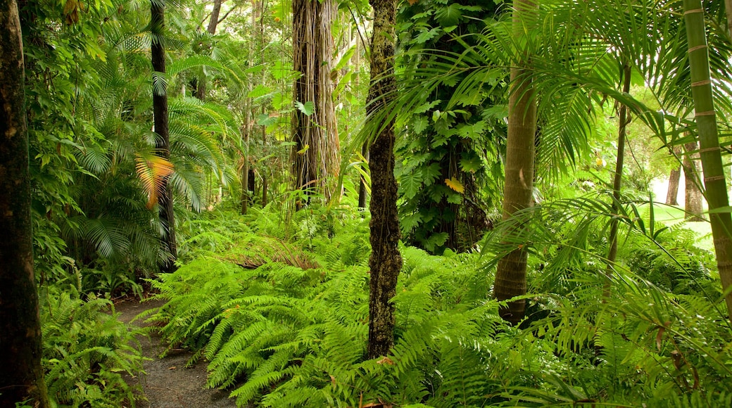 Hervey Bay which includes forest scenes and a park
