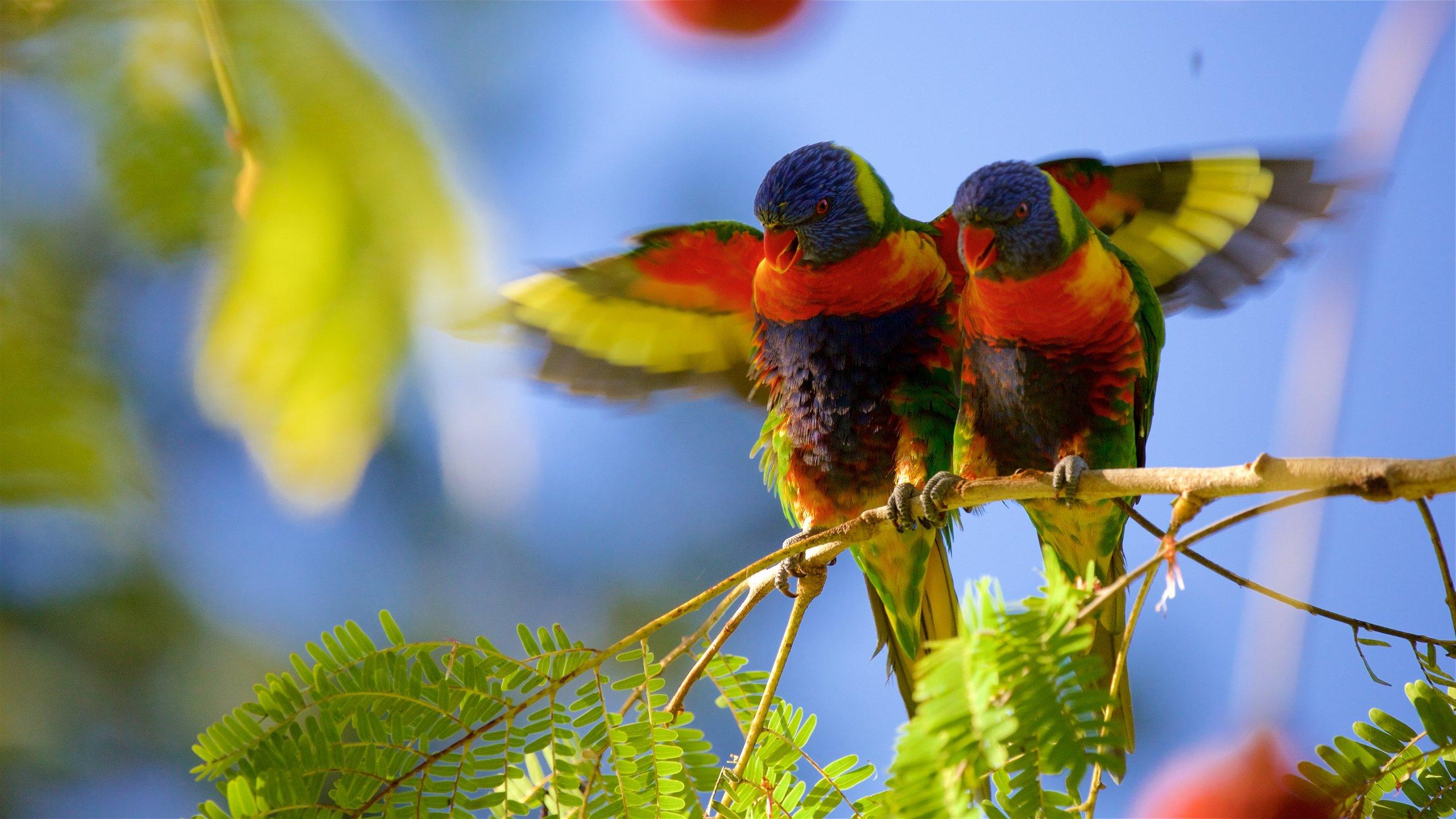 The Range, Rockhampton, Queensland, Australien