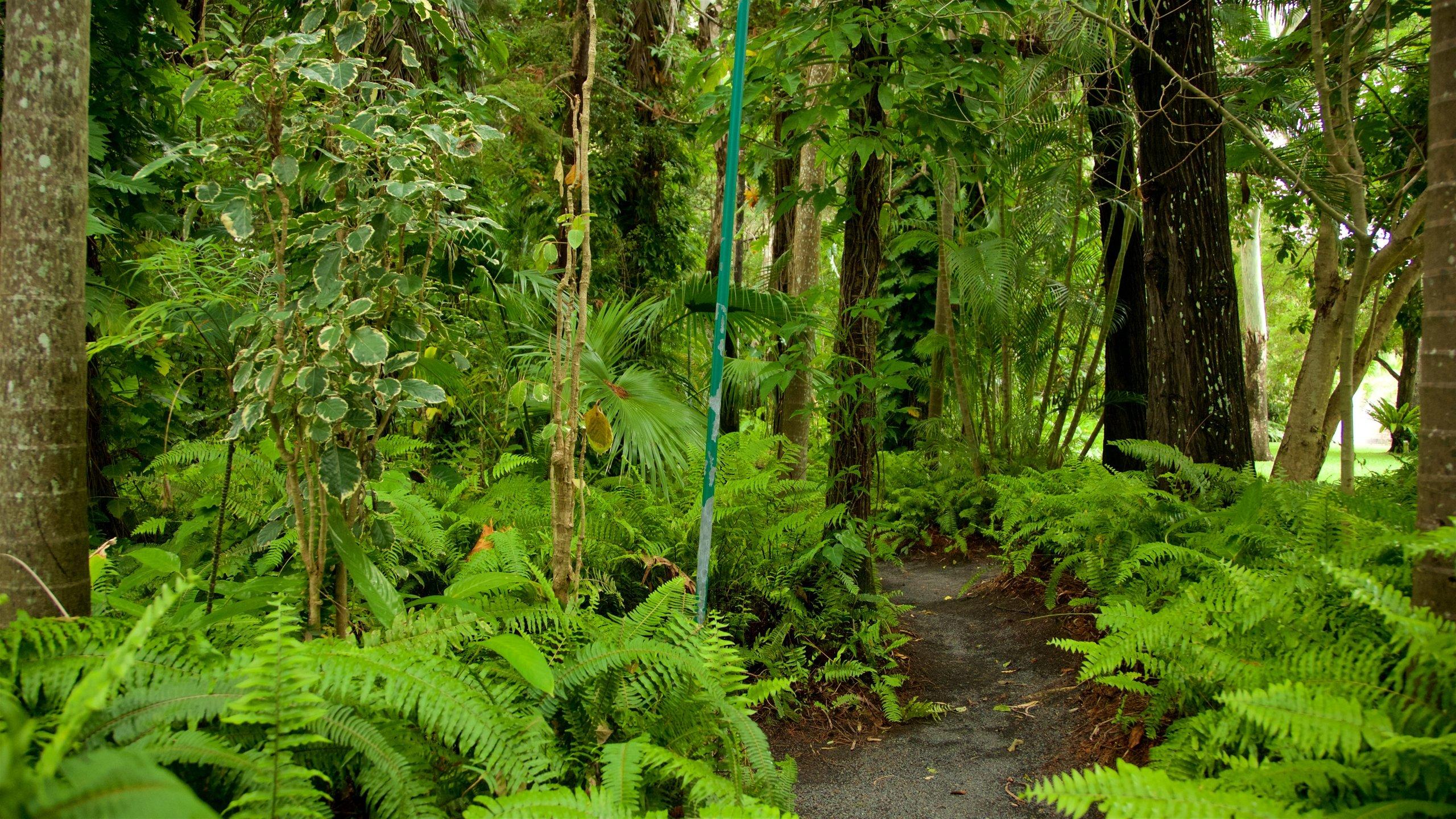 Hervey Bay Botanic Garden, Hervey Bay, Queensland, Australië