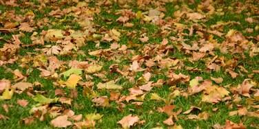Piazza della Pace mostrando foglie d\'autunno