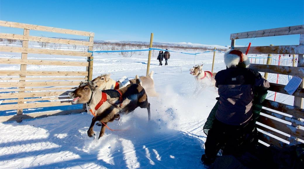 Kautokeino som inkluderer landdyr og snø