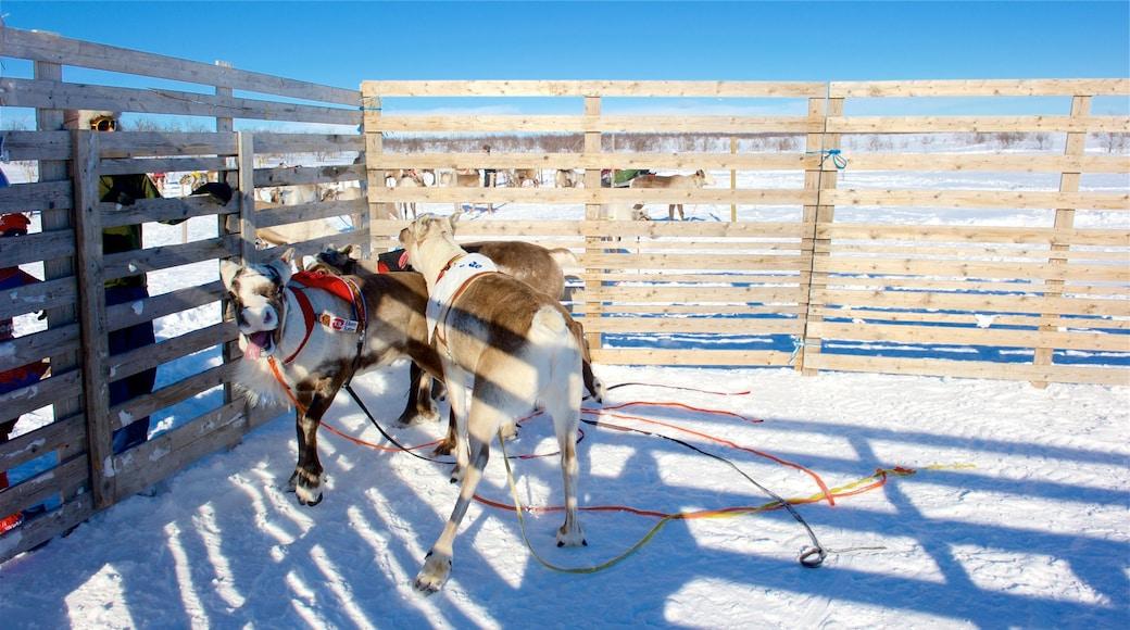 Kautokeino fasiliteter samt snø og landdyr