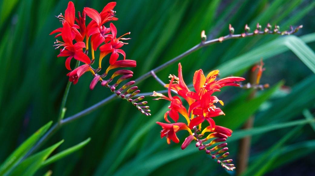 Galiano featuring flowers