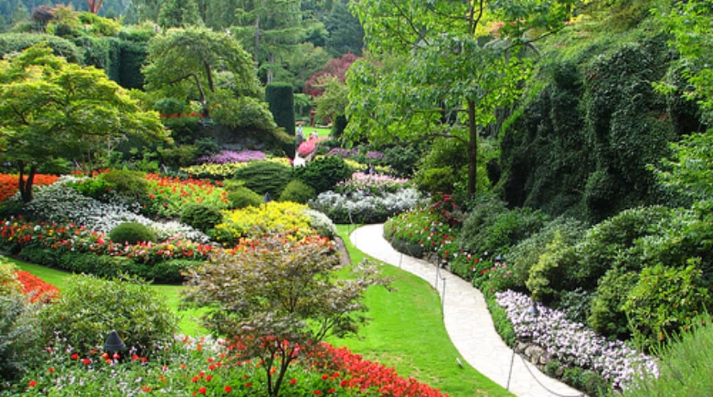 Butchart Gardens featuring a garden