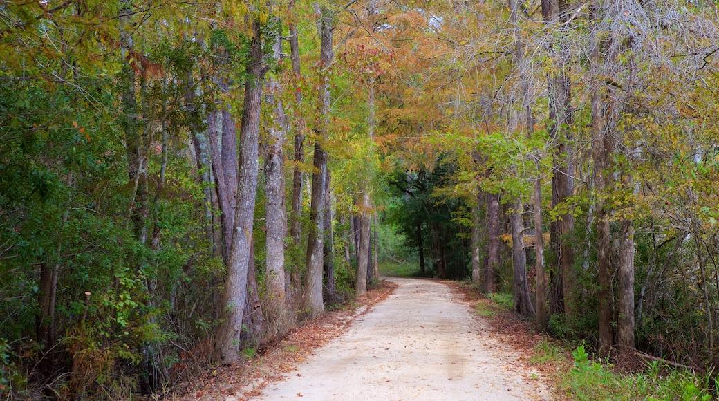 Georgetown mostrando cenas de floresta