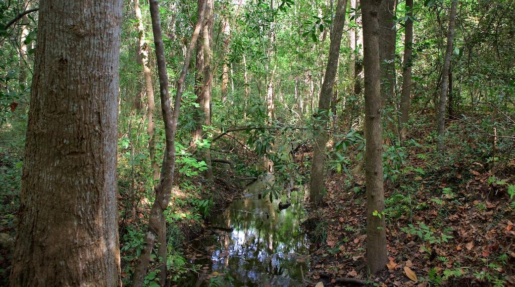 Myrtle Beach State Park welches beinhaltet Sumpfgebiet und Wälder